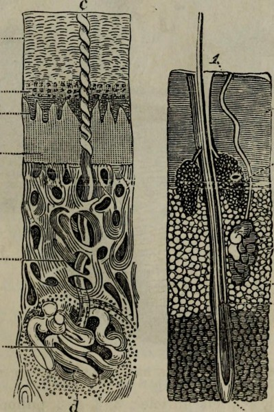 """Image from page 378 of """"Practical hydropathy, including plans of baths and remarks on diet, clothing and habits of life.."""" (1864)"""