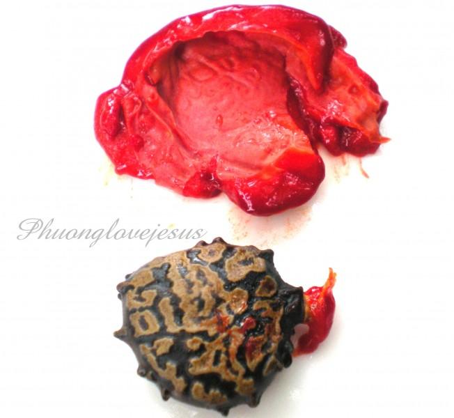 Seed and flesh of Gac fruit, Momordica cochinchinensis...Hạt và thịt ( cơm )cúa trái Gấc ....