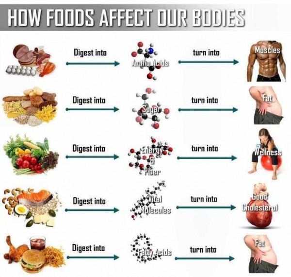 Daily diet to lose belly fat image 5