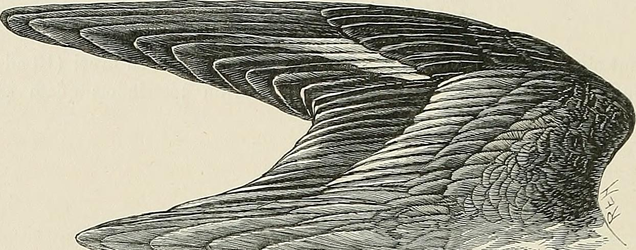 "Image from page 206 of ""The geographical distribution of the family Charadriidae, or the plovers, sandpipers, snipes, and their allies"" (1888)"